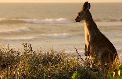 Vous allez adorer la Tasmanie !